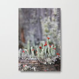 Red-tipped Lichen Metal Print
