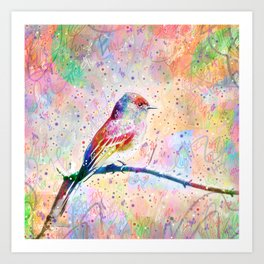 Flashy Phoebe - Black Phoebe Bird Art Print