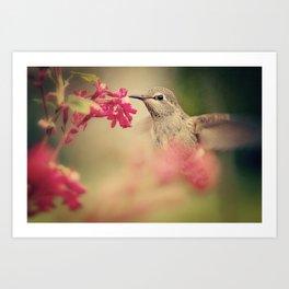 Sweet Nectar Art Print