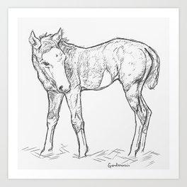 the foal Art Print