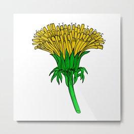 A Dandelion (Taraxacum officinale) Metal Print