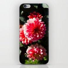 Dahlia iPhone & iPod Skin