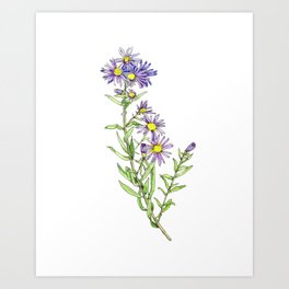 Purple Aster Wildflowers Art Print