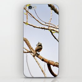 Perched Tufted Titmouse iPhone Skin