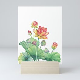 Pink Egyptian lotus flower with leaves and seed head and bud Mini Art Print