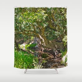 Wise old tree Shower Curtain