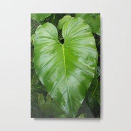 Elephant Ear Leaf Metal Print
