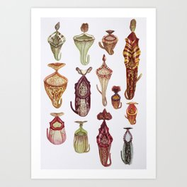 Nepenthes of the World: vol 2 Art Print