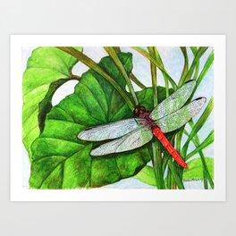 Scarlet Skimmer Art Print