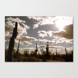 Saguaro National Park, Arizona Canvas Print