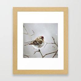 Solitary Bird Framed Art Print