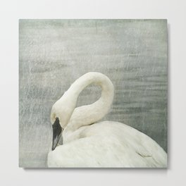 Museum Swan - Graceful Wildlife Still Life Metal Print