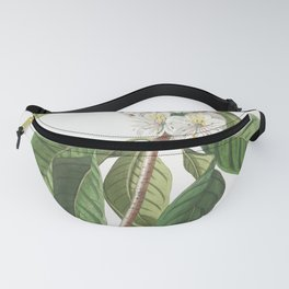 Plantae Selectae No 66-Rhododendron or Snow-rose by Georg Dionysius Ehret Fanny Pack