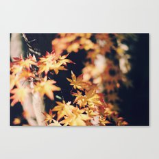 autumn reds 2 Canvas Print