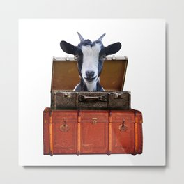 Goat - old suitcases -  Metal Print