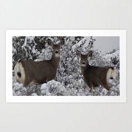 Mule Deer in the Oregon Snow Art Print