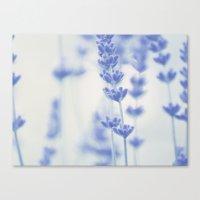 lavender Canvas Prints featuring Lavender  by SUNLIGHT STUDIOS  Monika Strigel