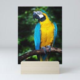 Blue and Gold Macaw Mini Art Print