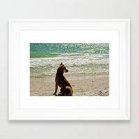 shiba Framed Art Prints featuring Shiba Inu by Blue Lightning Creative