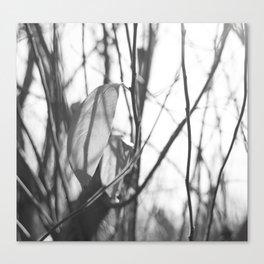 leafes Canvas Print