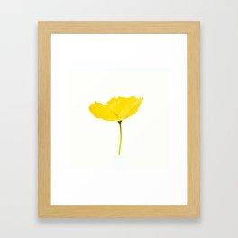 Yellow Poppy White Background #decor #society6 #buyart Framed Art Print