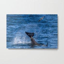 Tail Slap & Albatross Metal Print