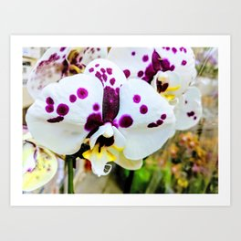 Spotted Orchids Art Print