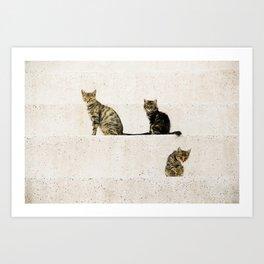 Turkish cats Art Print