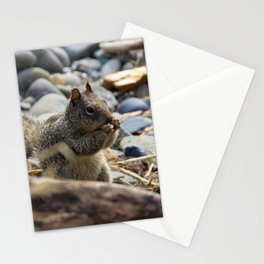 Squirrel Nibble Stationery Cards