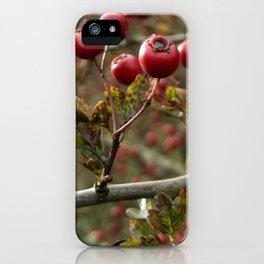 Hawthorn Berries iPhone Case