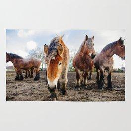 Belgian Draft Horse Rug