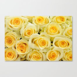 soft yellow roses close up Canvas Print