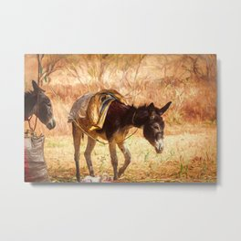Backyard Burro, Mexico Metal Print