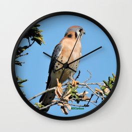 American Kestrel on Watch in La Verne Wall Clock