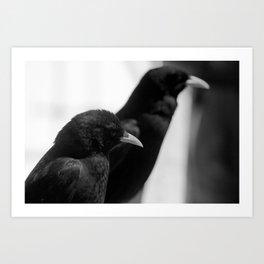 Birds on a rail Art Print
