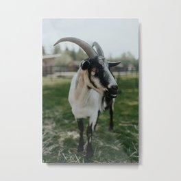 Farley I Metal Print