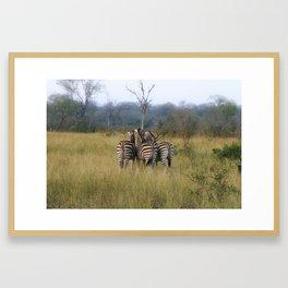 Zebra Butts Framed Art Print