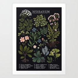 Herbarium ~ vintage inspired botanical art print ~ black Art Print
