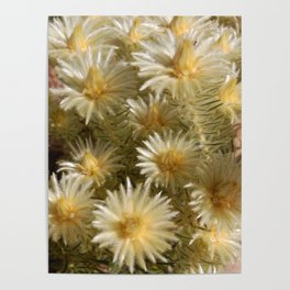 Fynbos Treasures Poster