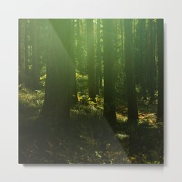 I tiptoe through the magic forest Metal Print