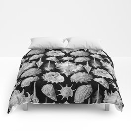 Black and White Beach Shells Comforters