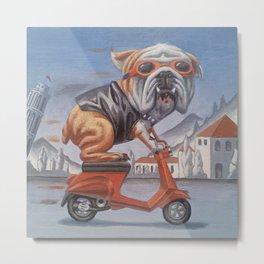Bulldog on Vespa Metal Print
