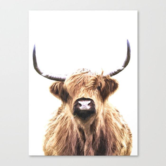 Highland Cow Portrait Canvas Print