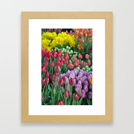 Colorful bunches of spring tulips Framed Art Print