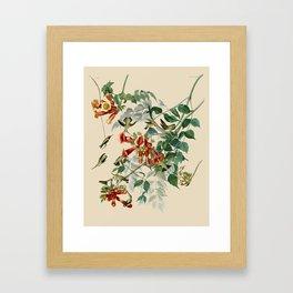 Vintage Hummingbird Illustration - Birds of America Framed Art Print