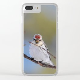Posing Common Redpoll Clear iPhone Case