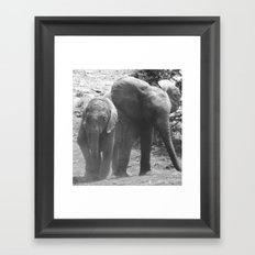 Young african elephants Framed Art Print