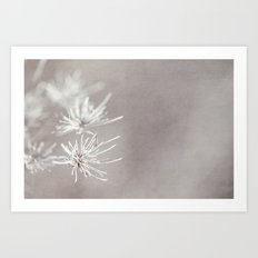 natures beauty Art Print