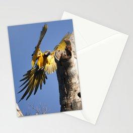 Birds from Pantanal Arara Canindé Stationery Cards