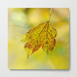 """Yellow autumn....., golden leave"". Metal Print"